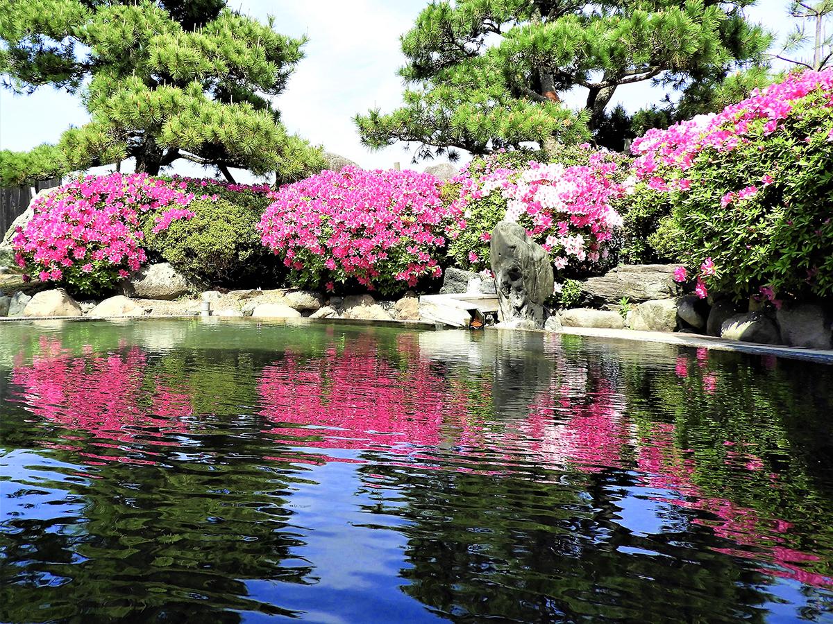 初夏:つつじ 庭園露天風呂 羽衣の湯